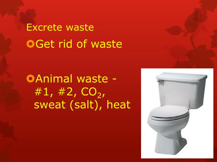 Excrete waste
