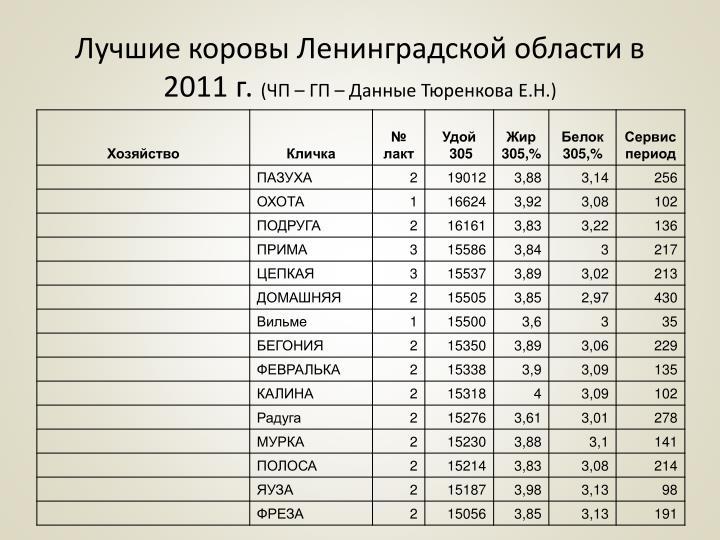 Лучшие коровы Ленинградской области в 2011 г.