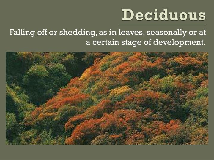 Deciduous