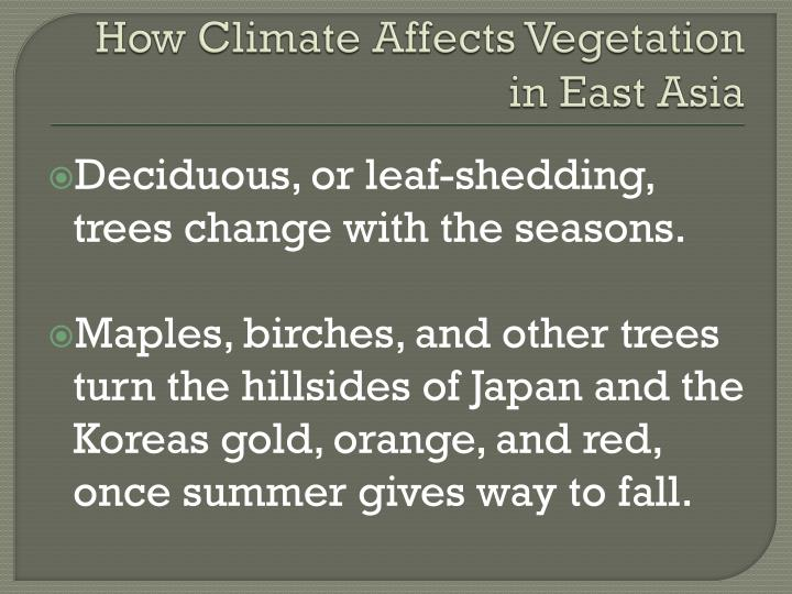 How Climate Affects Vegetation in East Asia