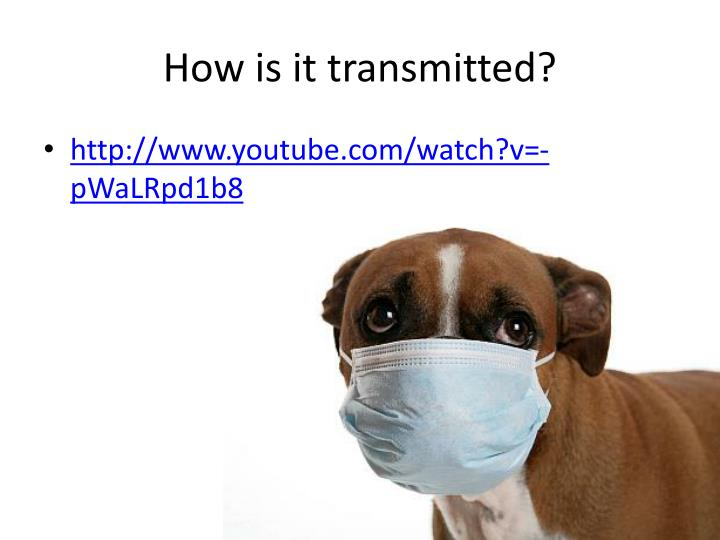 How is it transmitted?