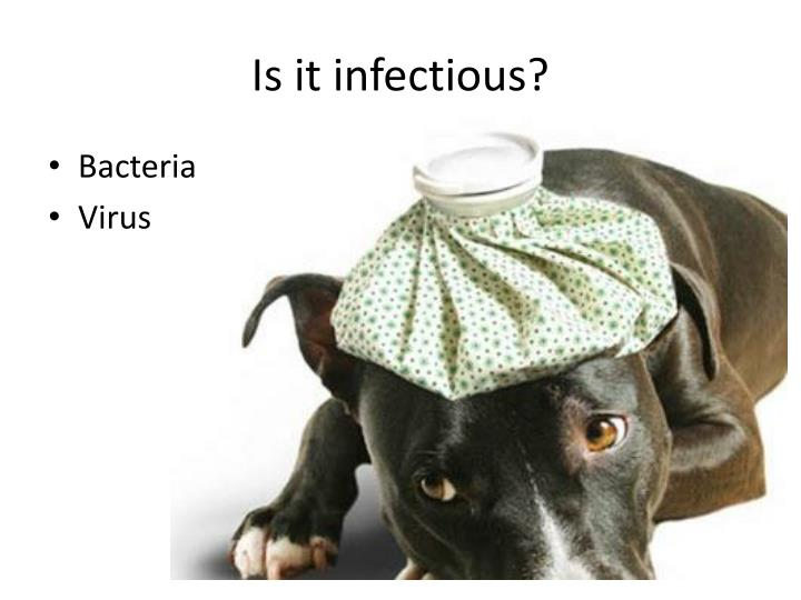 Is it infectious?
