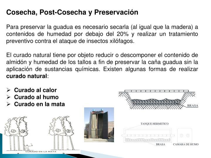 Cosecha, Post-Cosecha y Preservación