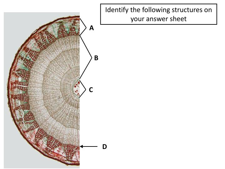 Identify the following structures on your answer sheet