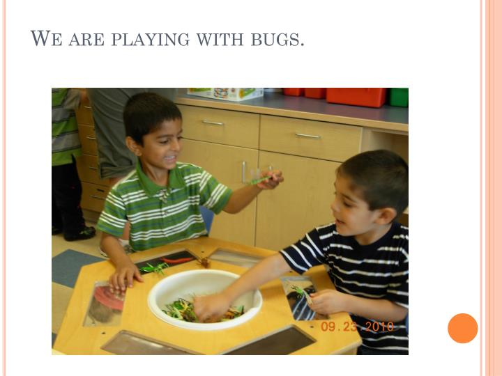 We are playing with bugs.