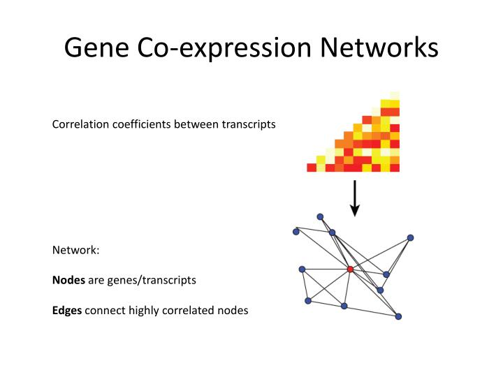 Gene Co-expression Networks