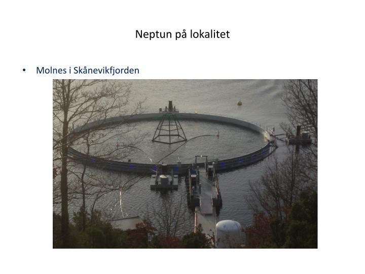 Neptun på lokalitet
