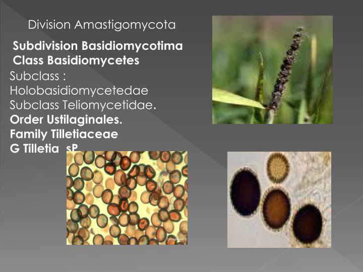 Division Amastigomycota