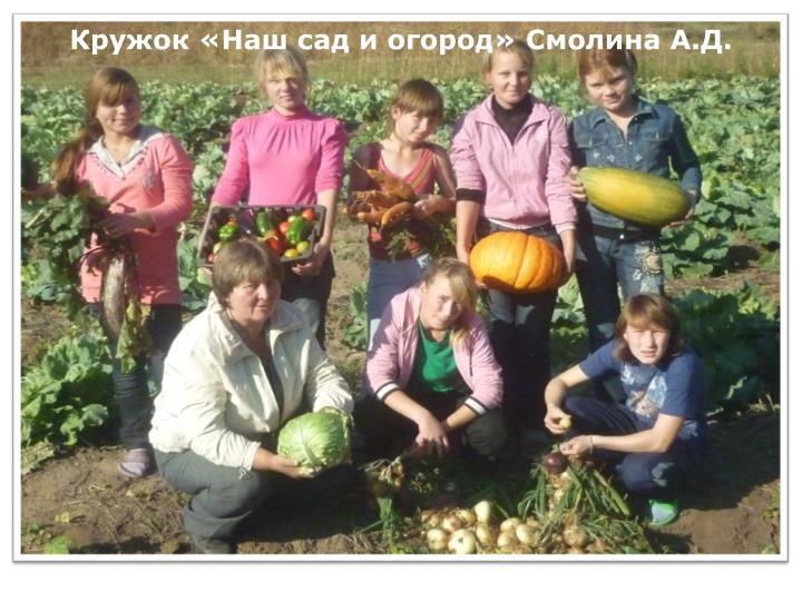 Кружок «Наш сад и огород