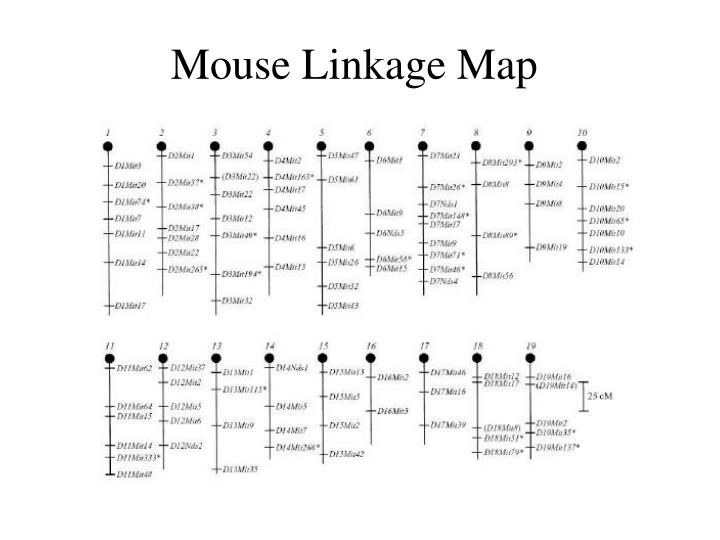 Mouse Linkage Map