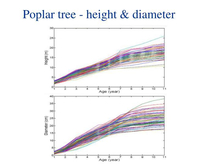 Poplar tree - height & diameter