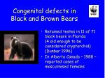 congenital defects in black and brown bears
