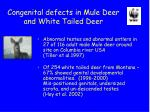congenital defects in mule deer and white tailed deer