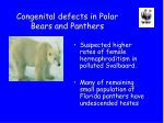 congenital defects in polar bears and panthers