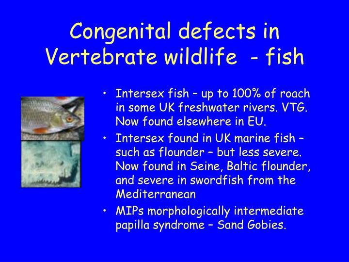 Congenital defects in Vertebrate wildlife  - fish