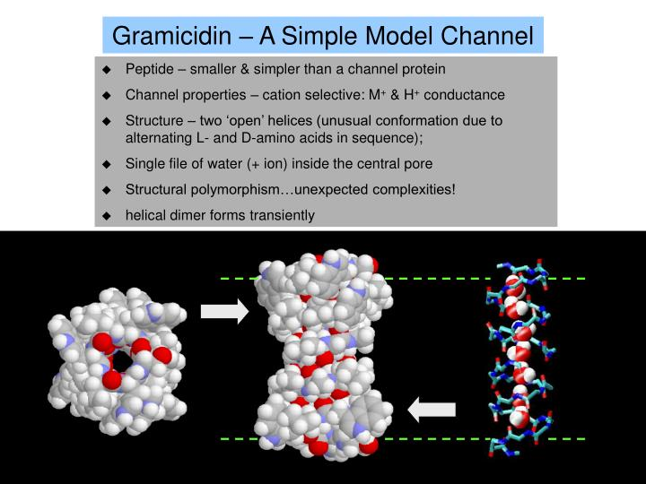 Gramicidin – A Simple Model Channel