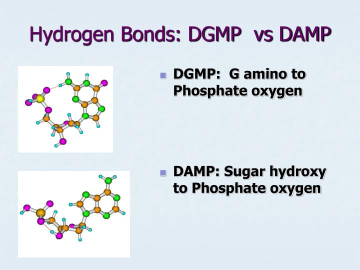 Hydrogen Bonds: DGMP  vs DAMP
