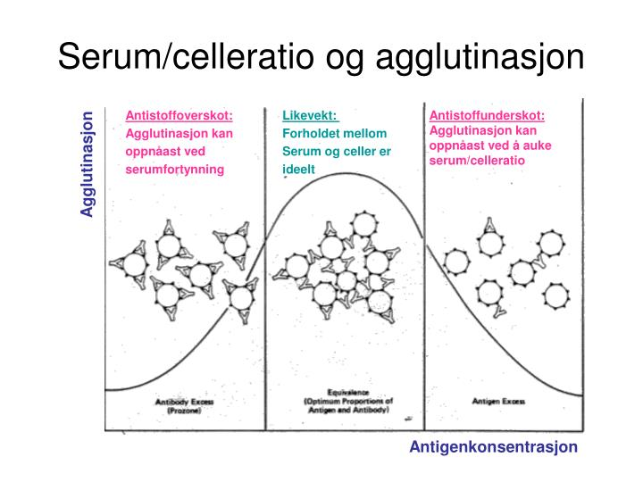 Serum/celleratio og agglutinasjon