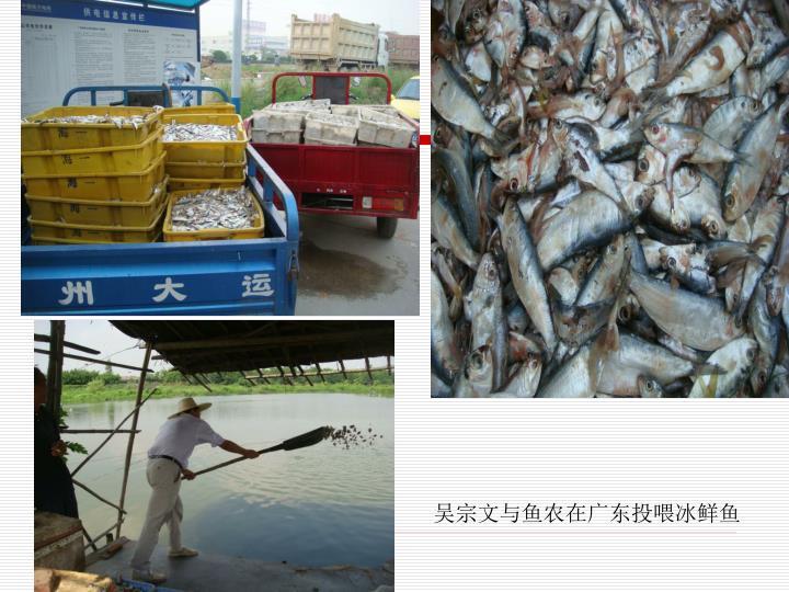 吴宗文与鱼农在广东投喂冰鲜鱼