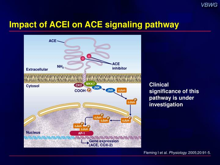Impact of ACEI on ACE signaling pathway