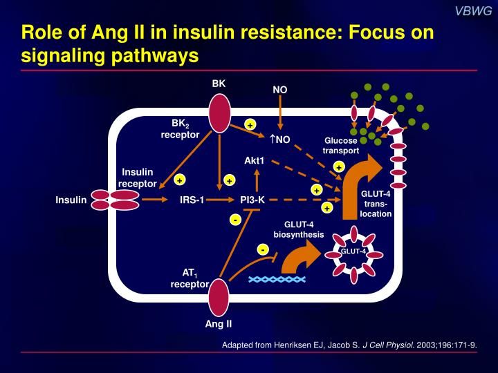 Role of Ang II in insulin resistance: Focus on signaling pathways