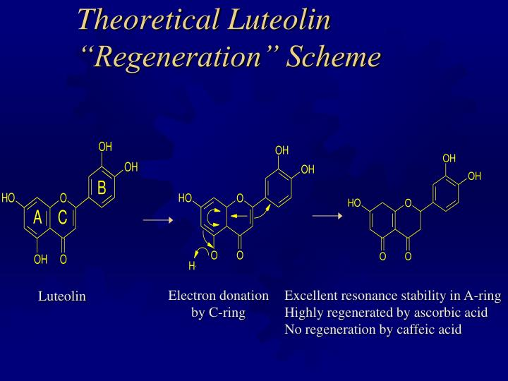 "Theoretical Luteolin ""Regeneration"" Scheme"