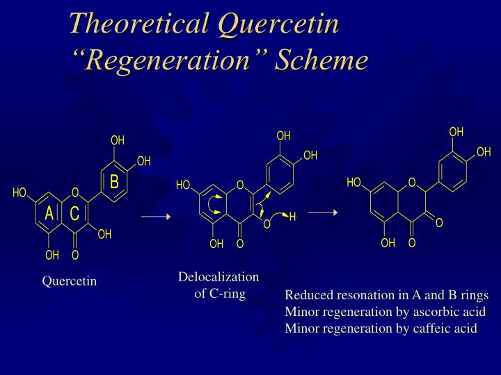 "Theoretical Quercetin ""Regeneration"" Scheme"