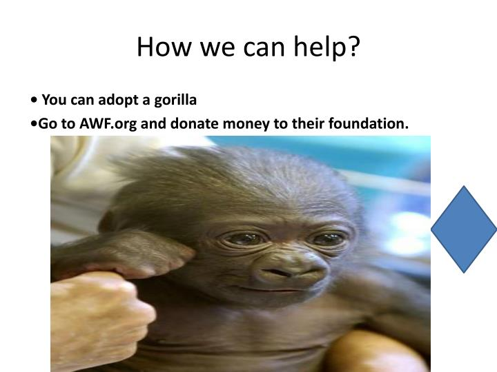 How we can help?