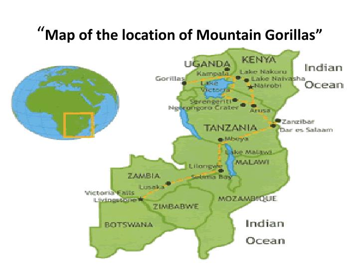 Map of the location of mountain gorillas