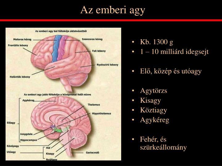 Az emberi agy