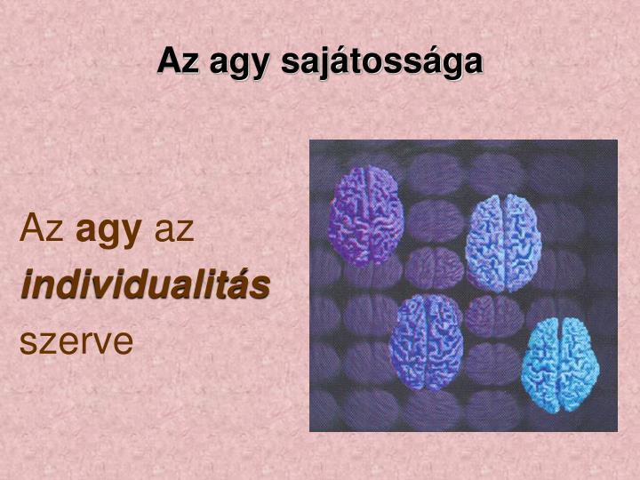 Az agy sajátossága