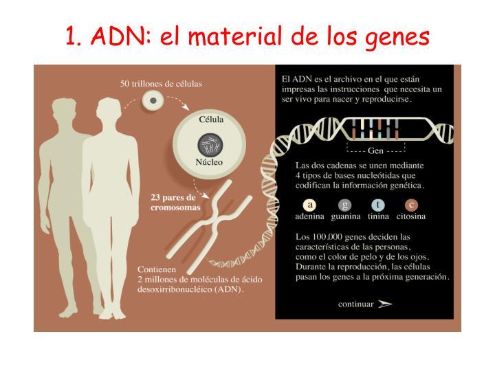 1. ADN: el material de los genes
