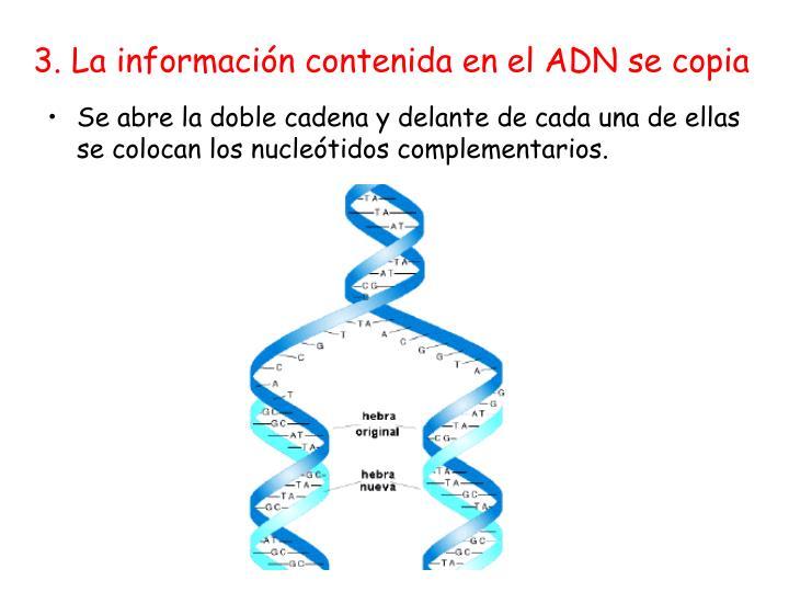 3. La información contenida en el ADN se copia