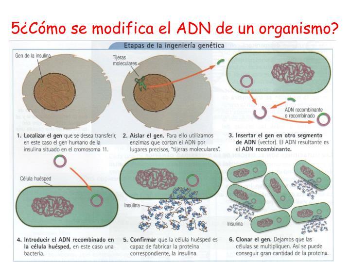 5¿Cómo se modifica el ADN de un organismo?