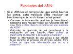 funciones del adn