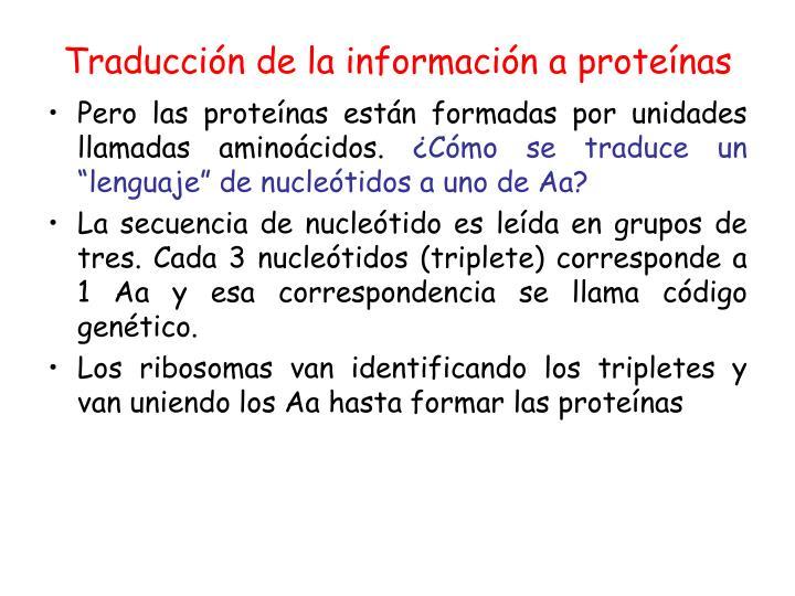 Traducción de la información a proteínas