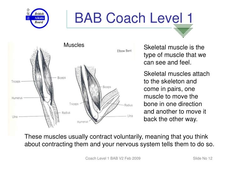 BAB Coach Level 1