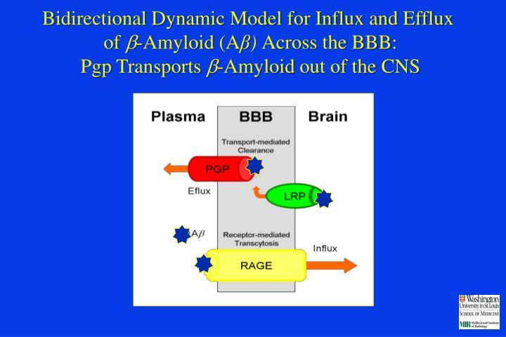 Bidirectional Dynamic