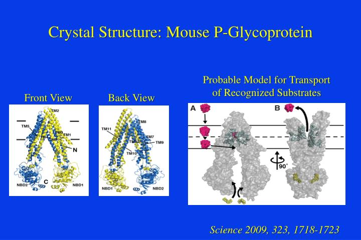 Crystal Structure: Mouse P-Glycoprotein