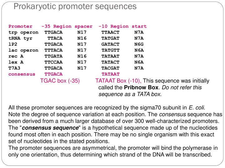 Prokaryotic promoter sequences