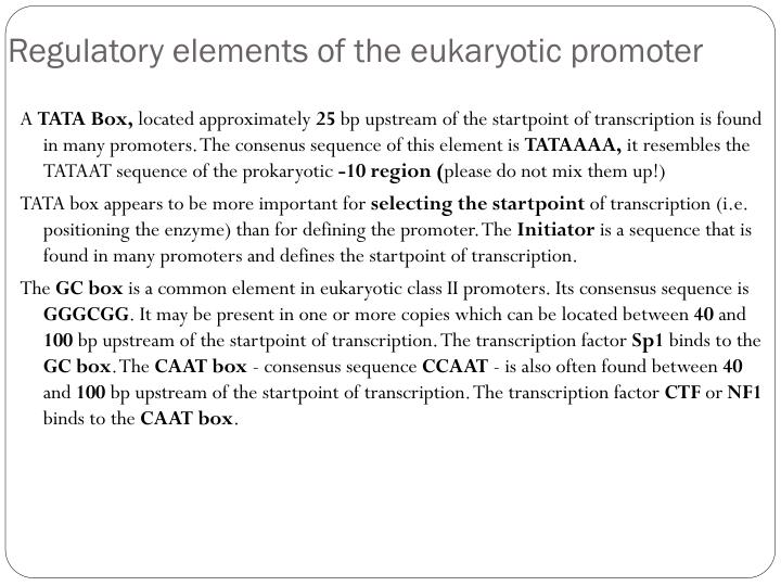 Regulatory elements of the eukaryotic promoter