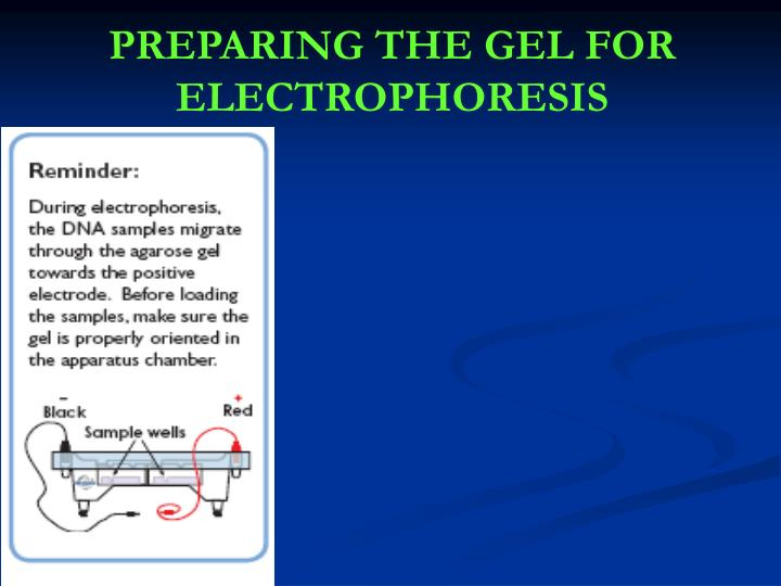 PREPARING THE GEL FOR ELECTROPHORESIS