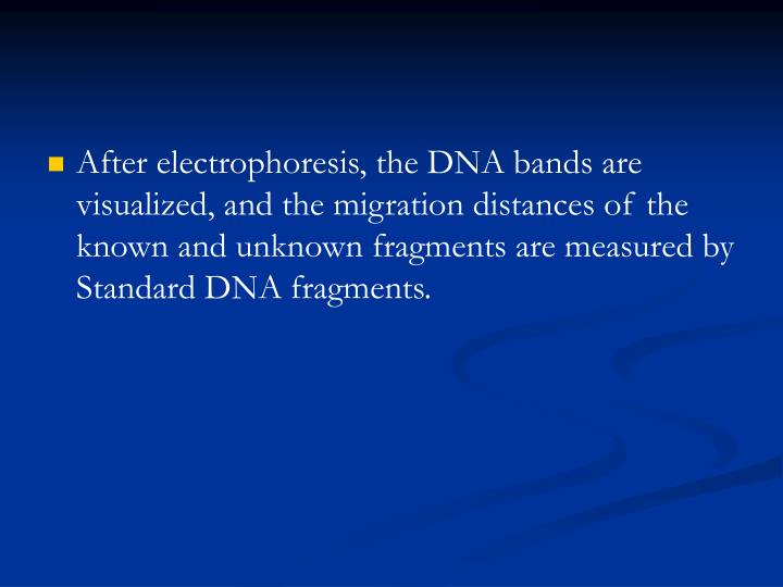 After electrophoresis, the DNA bands are visualized, and the migration distances of the known and unknown fragments are measured by Standard DNA fragments.