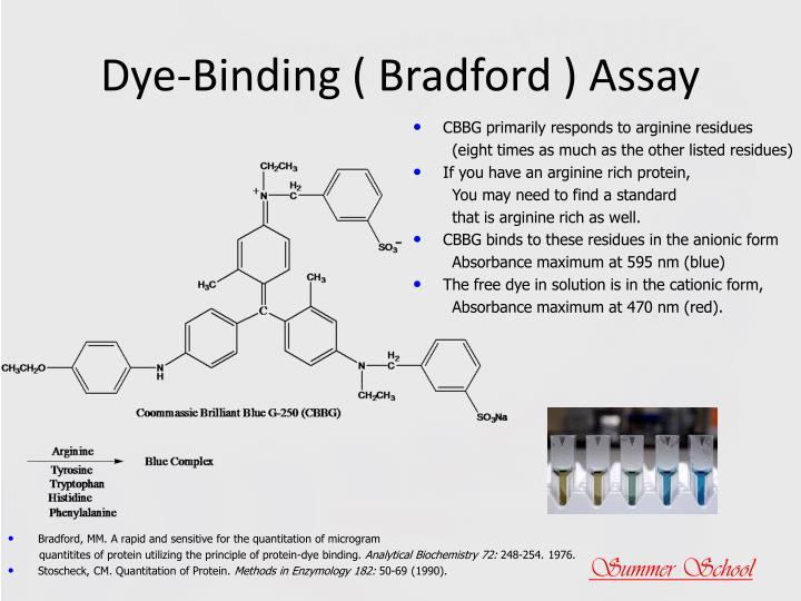 Dye-Binding ( Bradford ) Assay
