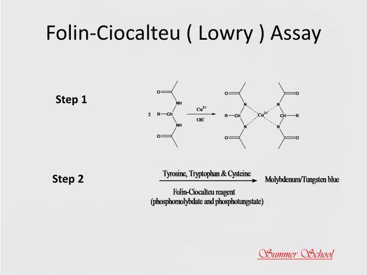 Folin-Ciocalteu ( Lowry ) Assay