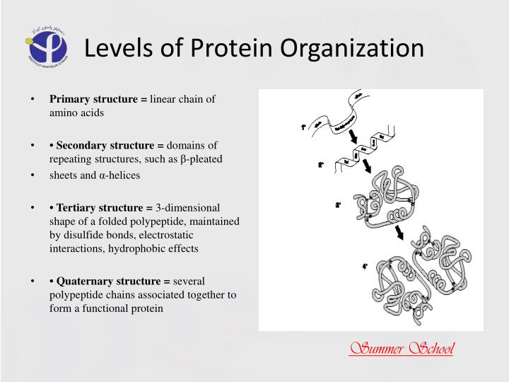 Levels of Protein Organization