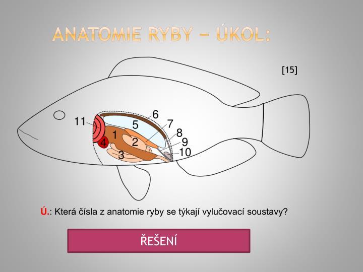 anatomie ryby − úkol: