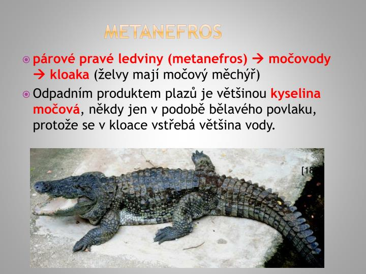 METANEFROS