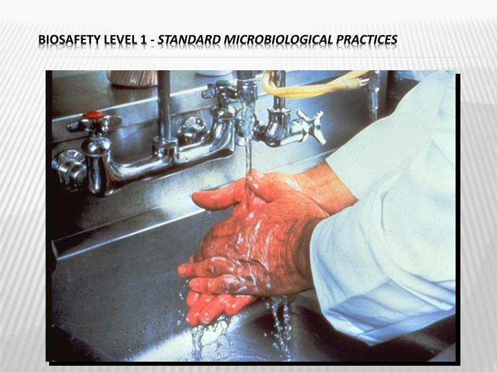 Biosafety Level 1 -