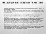 cultivation and isolation of bacteria